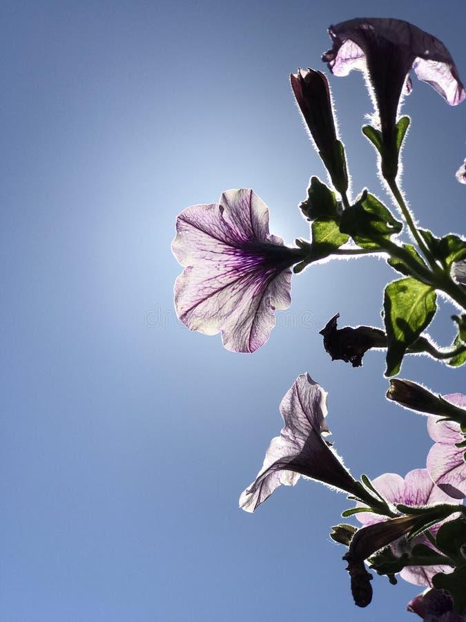 Fleurs pourpres devant photo stock