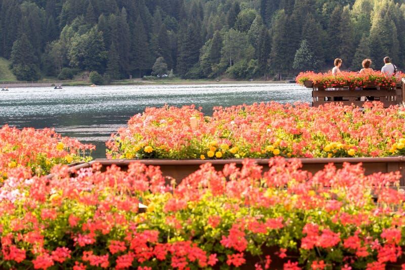 Fleurs près des dolomites photographie stock