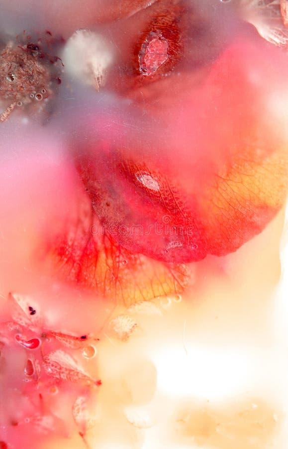 Fleurs préservées cinq images libres de droits