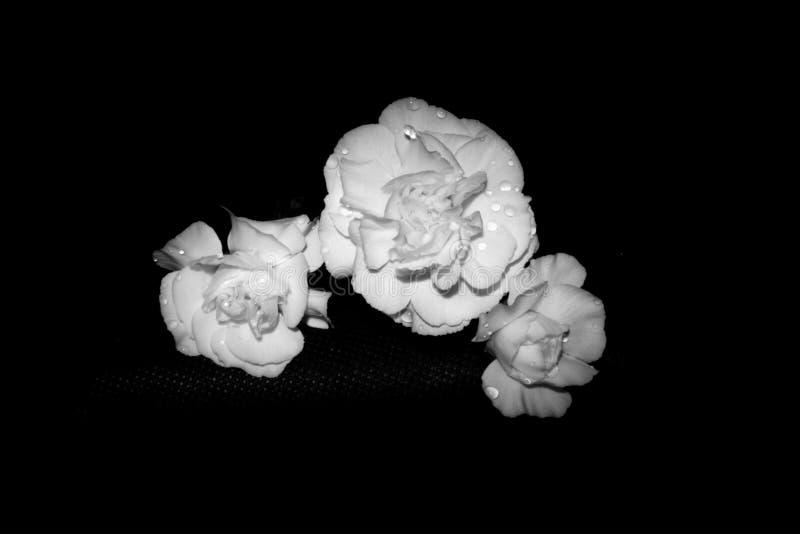 Fleurs prêtées. images libres de droits