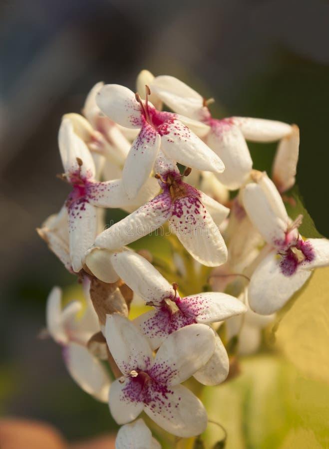 Fleurs qui ressemble aux personnes courantes photographie stock