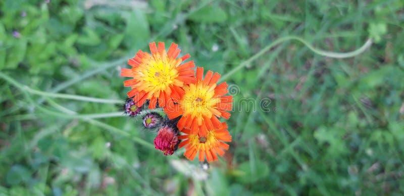 Fleurs qui sont exceptionnelles images libres de droits