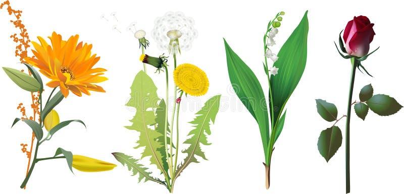 fleurs réglées illustration de vecteur