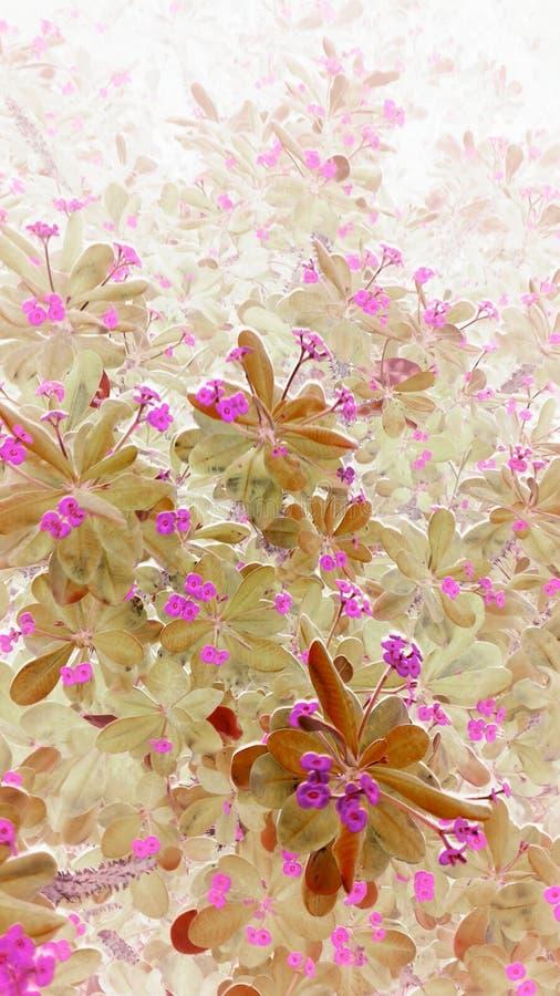 Fleurs rêveuses photo libre de droits