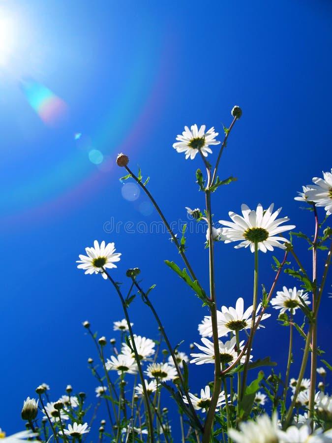 Fleurs recherchant le Sun photographie stock libre de droits