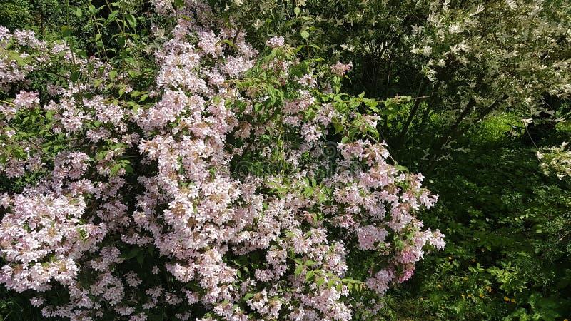 Fleurs roses images libres de droits