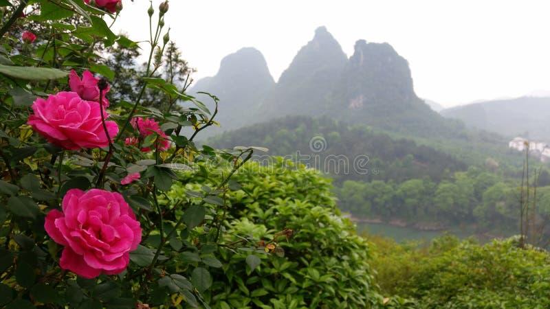 Fleurs roses avec le paysage de montagne de la Chine photos stock