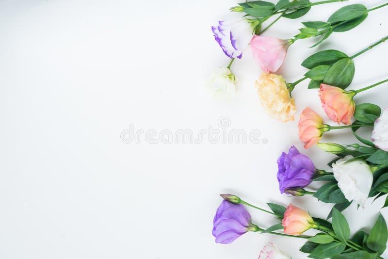 Fleurs roses, blanches et violettes photo libre de droits