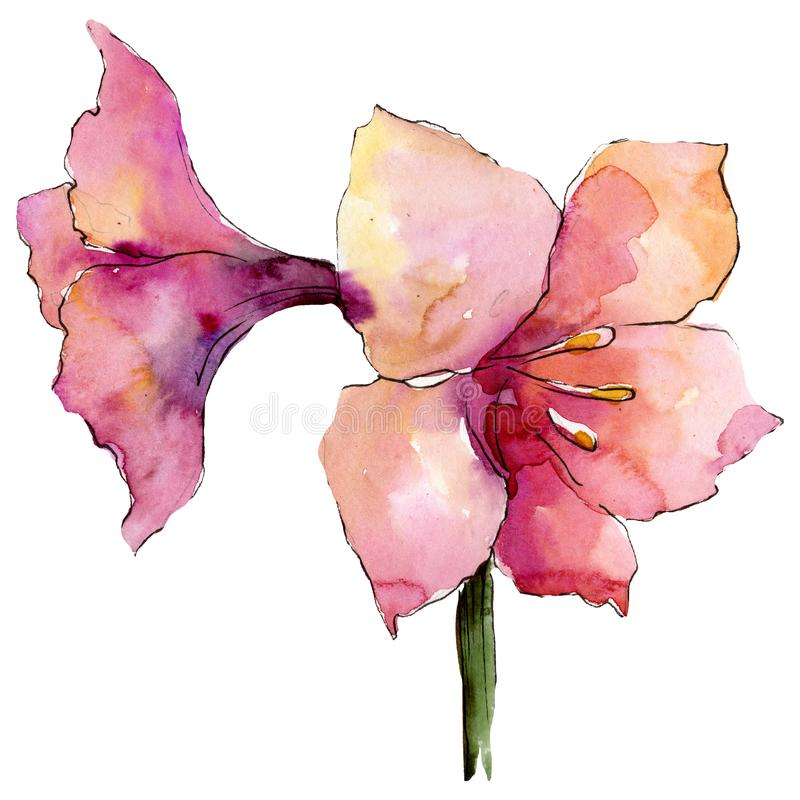 Fleurs roses d'amaryllis élément d'illustration de bouquet Ensemble d'illustration de fond d'aquarelle illustration stock