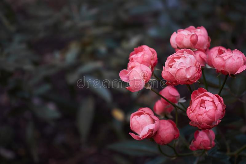 Fleurs roses dans une forêt photos libres de droits