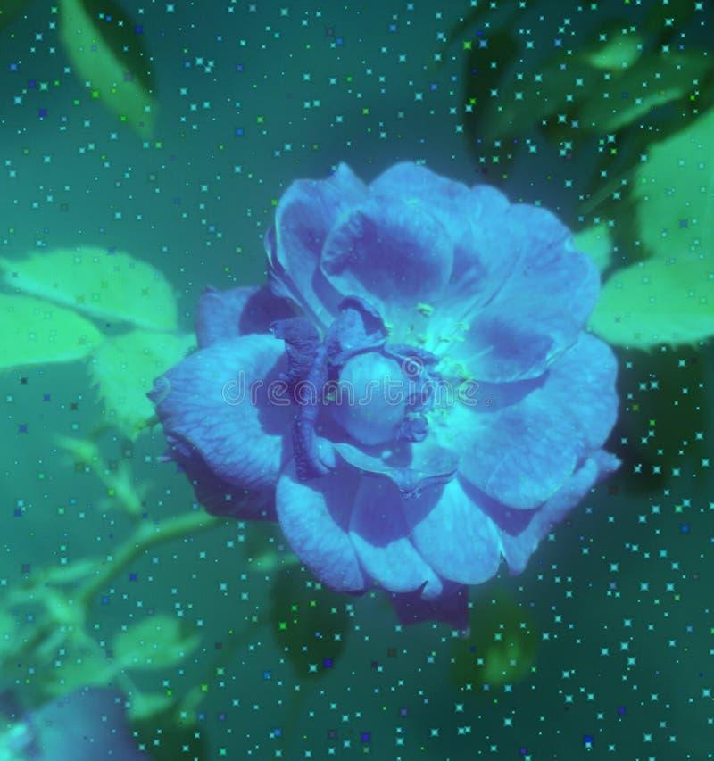 Fleurs roses de bleu illustration de vecteur