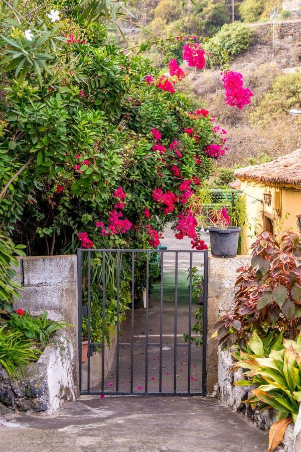 Fleurs roses de bouganvillée sur la porte espagnole photographie stock libre de droits