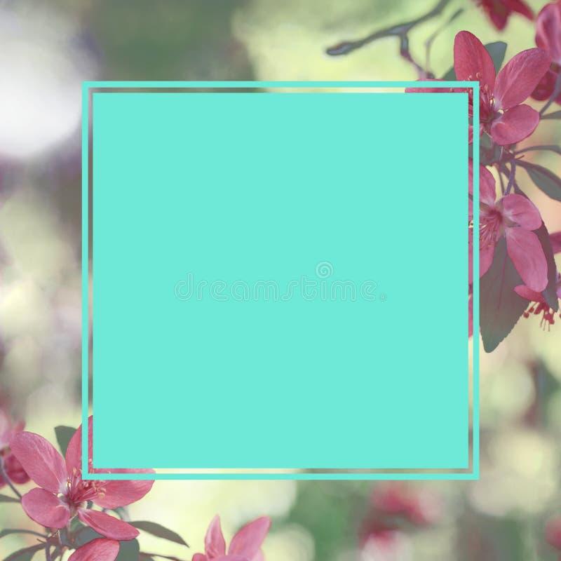 Fleurs roses de ressort avec le cadre carré pour le texte Calibre pour l'inv image stock
