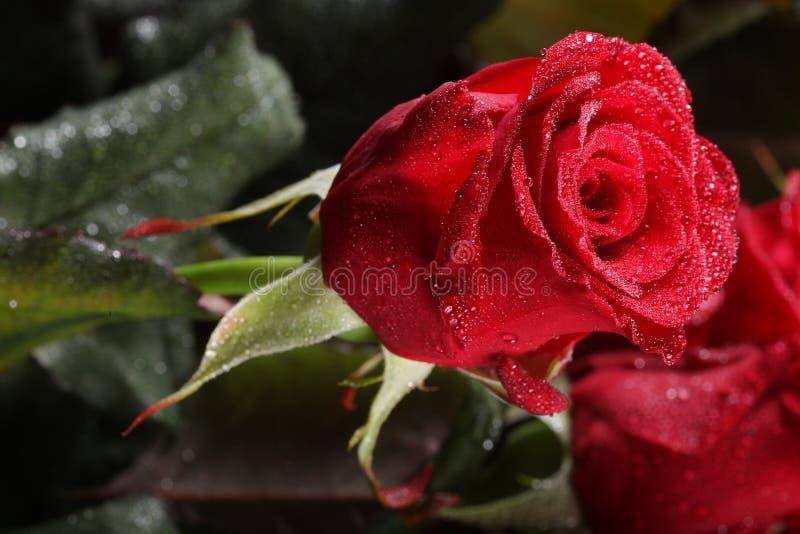 Fleurs roses de rouge photo stock