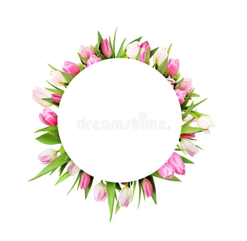 Fleurs roses de tulipe dans le cadre rond photo stock