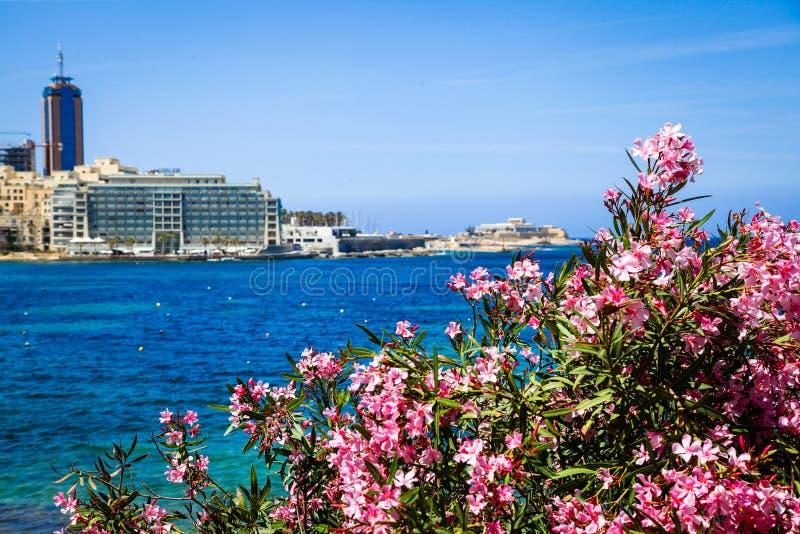 Fleurs roses devant la mer images stock