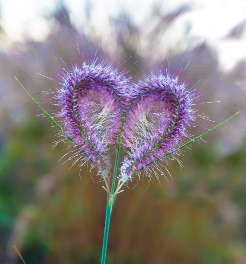 Fleurs roses en forme de coeur photo libre de droits