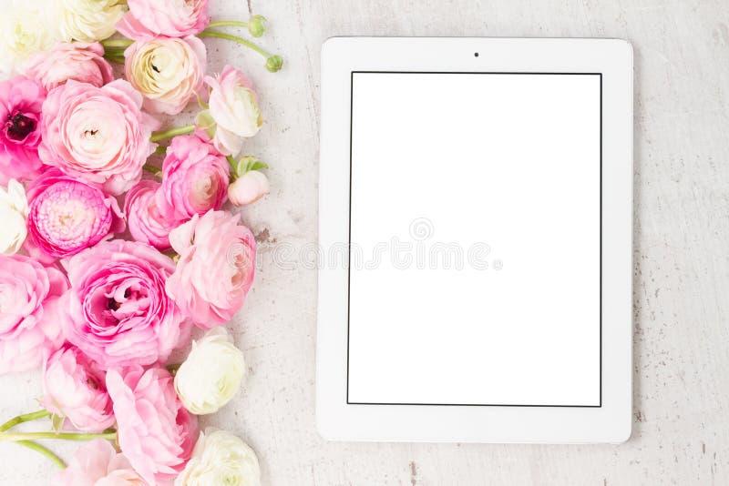 Fleurs roses et blanches de ranunculus images libres de droits