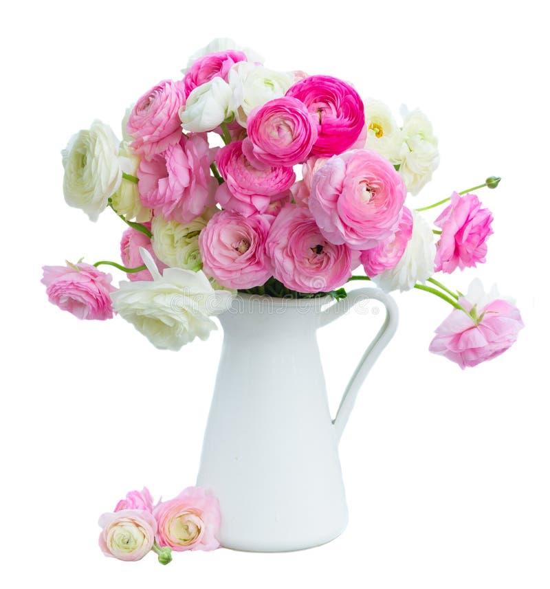 Fleurs roses et blanches de ranunculus image libre de droits