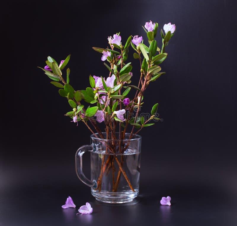 Fleurs roses et lilas d'un thé de Labrador sur un fond noir photographie stock