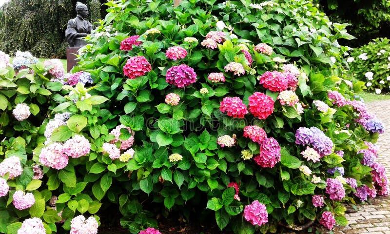Fleurs roses et pourprées photo libre de droits