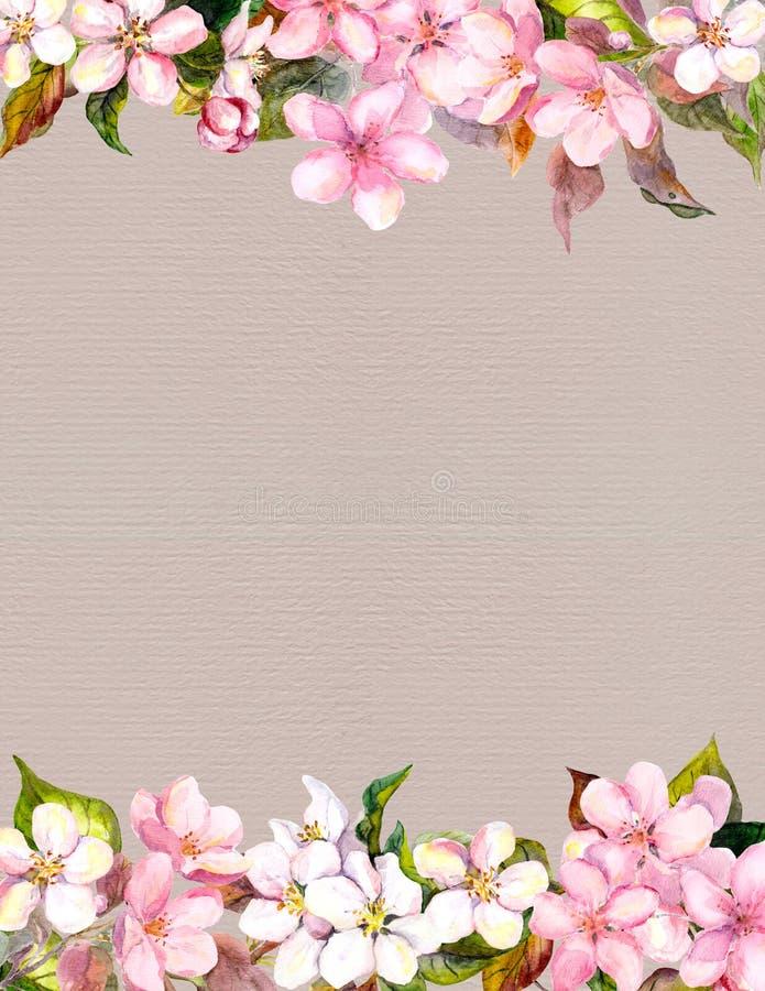 Fleurs roses - pomme, fleurs de cerisier Cadre floral pour le fond watercolour image stock
