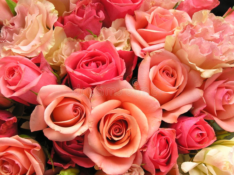 Fleurs roses romantiques photos libres de droits