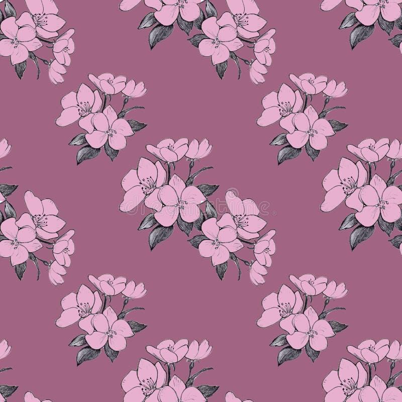 Fleurs roses sans couture de pomme de modèle tiré par la main sur le fond de Bordeaux illustration libre de droits