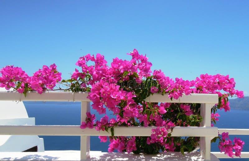 Fleurs roses sur un fond de mer bleue photo stock