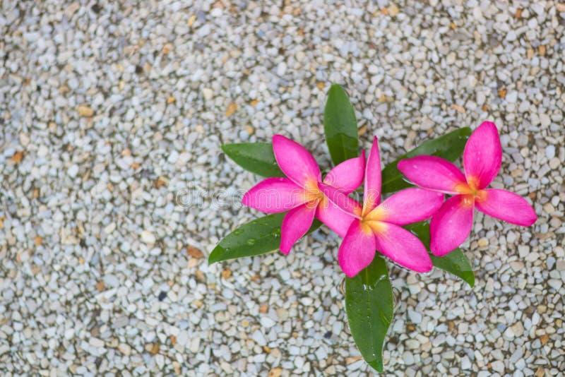 Fleurs roses thaïlandaises de plumeria avec le sable et le waterbackground image stock