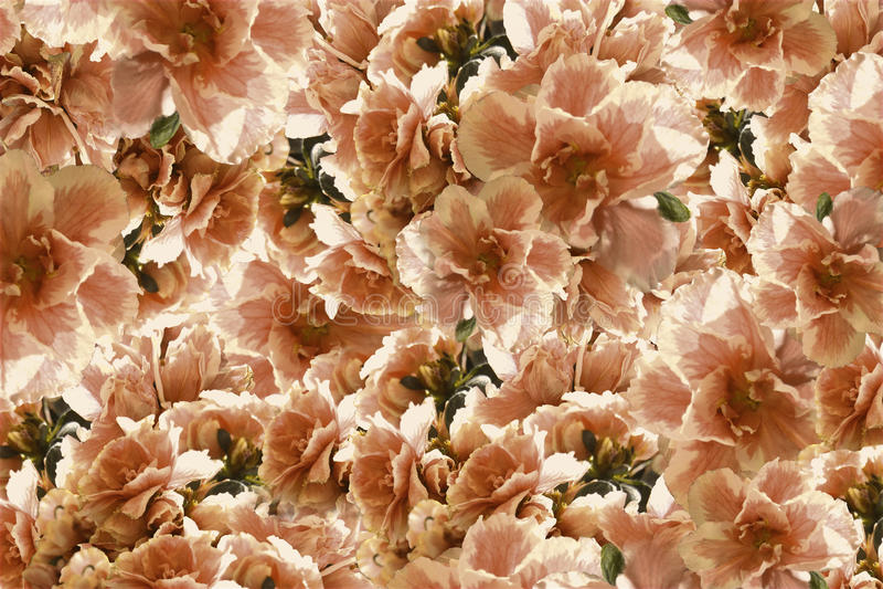 Fleurs rouge-jaune-brunes de roses de vintage Drapeau des fleurs Background collage floral Composition de fleur images stock