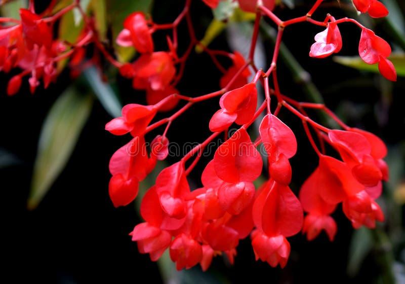 Fleurs rouges à un arrière-plan de nature photo libre de droits