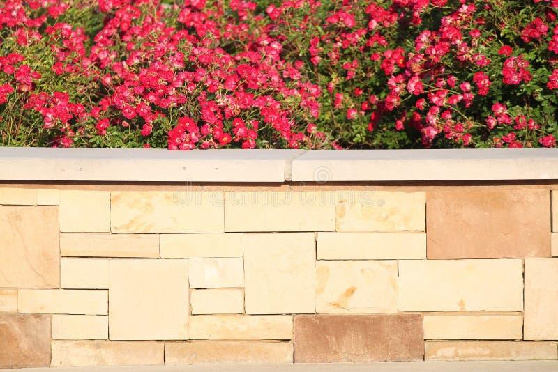 Fleurs rouges au-dessus de brique photographie stock libre de droits