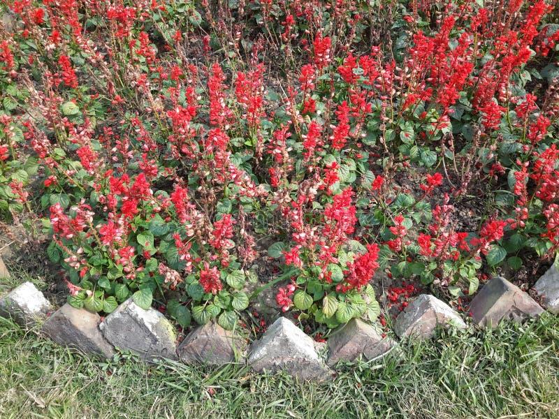Fleurs rouges dans le jardin photo stock