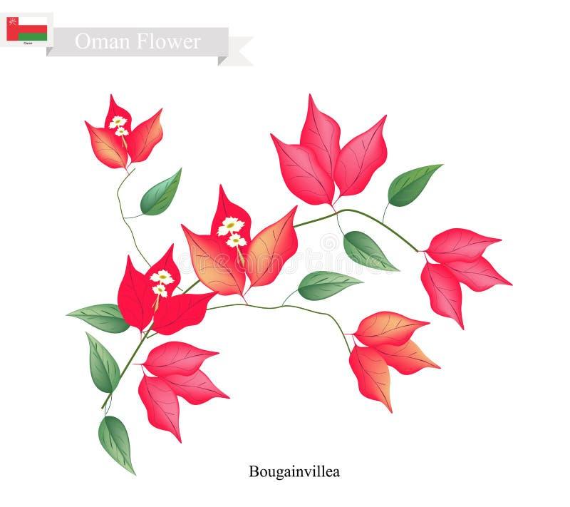 Fleurs rouges de bouganvillée, la fleur indigène de l'Oman illustration libre de droits