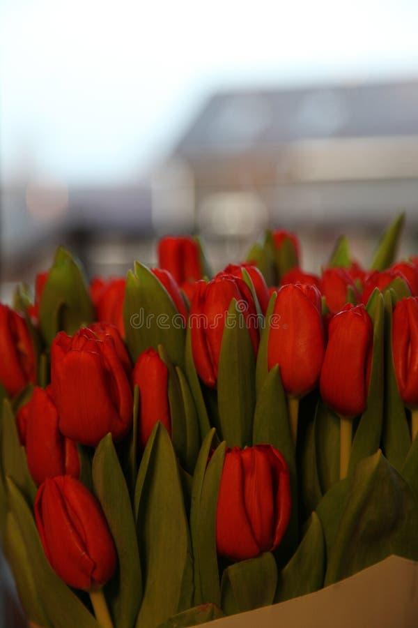 Fleurs rouges de nature de ressort de tulipes image stock