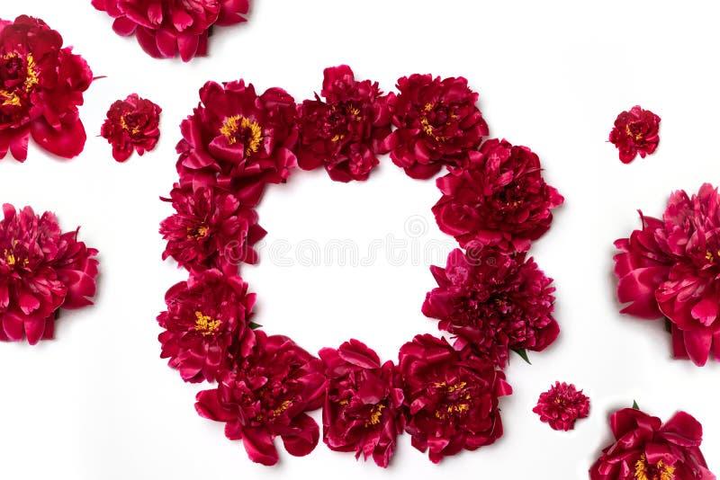 Fleurs rouges de pivoine sous forme de cercle sur un fond rose Concept de ressort avec le fond floral images libres de droits