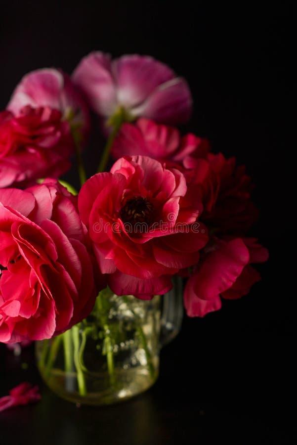Fleurs rouges de ranunculus sur le fond noir Photo fonc?e photo stock
