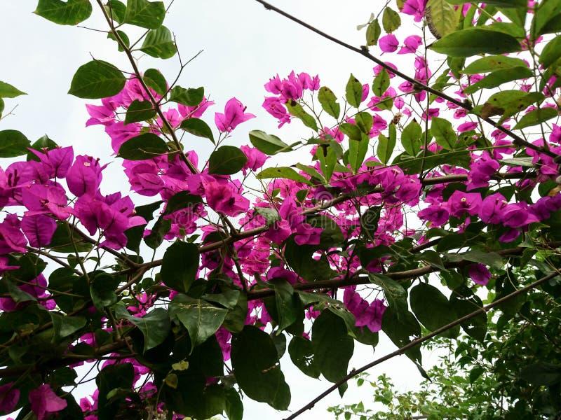 Fleurs rouges de saison d'automne photographie stock libre de droits