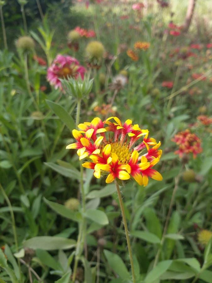 Fleurs rouges et jaunes au point de repère photographie stock libre de droits