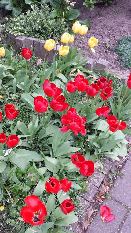Fleurs rouges lumineuses photographie stock libre de droits