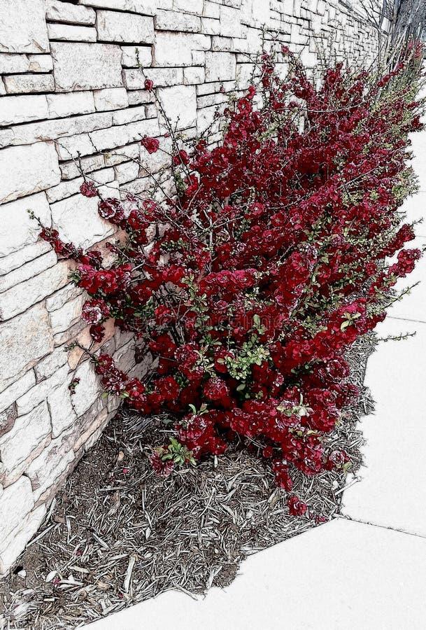 Fleurs rouges sang photo libre de droits