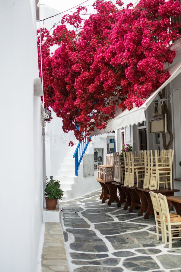 Fleurs rouges sur une rue image stock