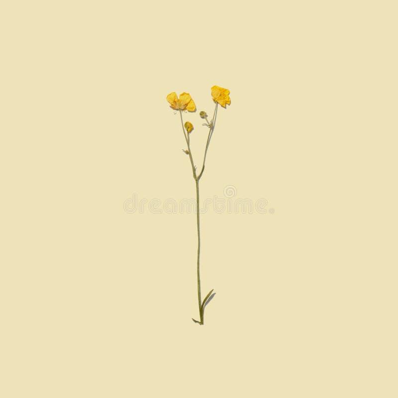 Fleurs sèches d'été photos stock