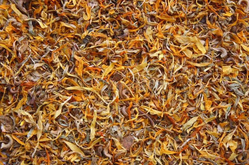 Fleurs sèches de calendula photo stock