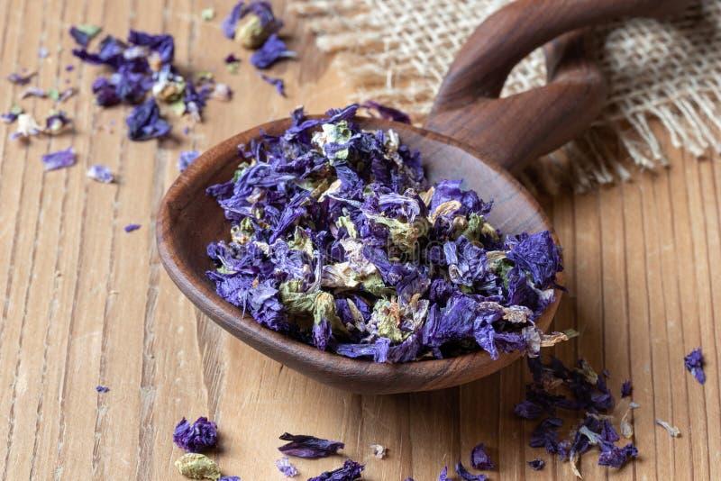 Fleurs sèches de mauritiana de sylvestris de malva, un grand choix de mauve photos libres de droits