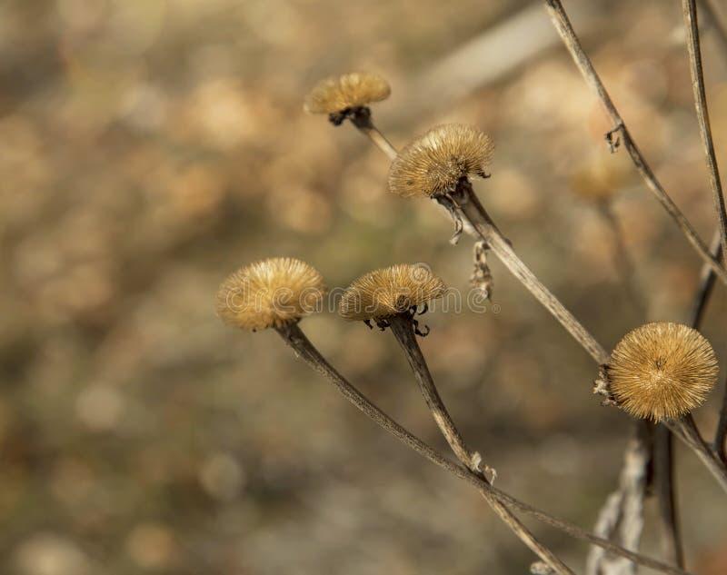 Fleurs sèches de pré photo libre de droits