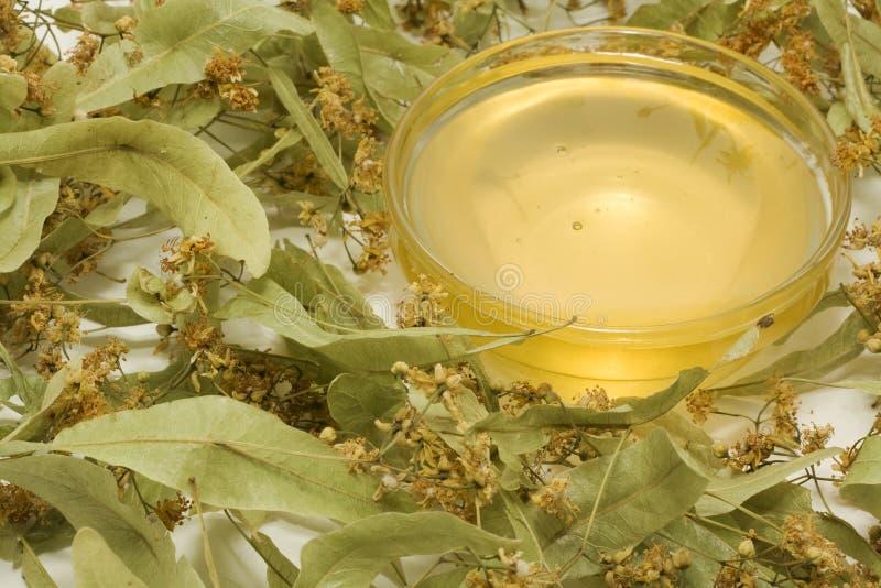 Fleurs sèches de tilleul-arbre photographie stock