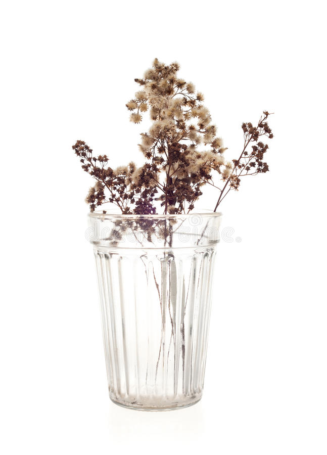 Fleurs sèches en verre photos stock