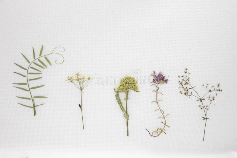 Fleurs sèches réglées sur le fond blanc photo libre de droits